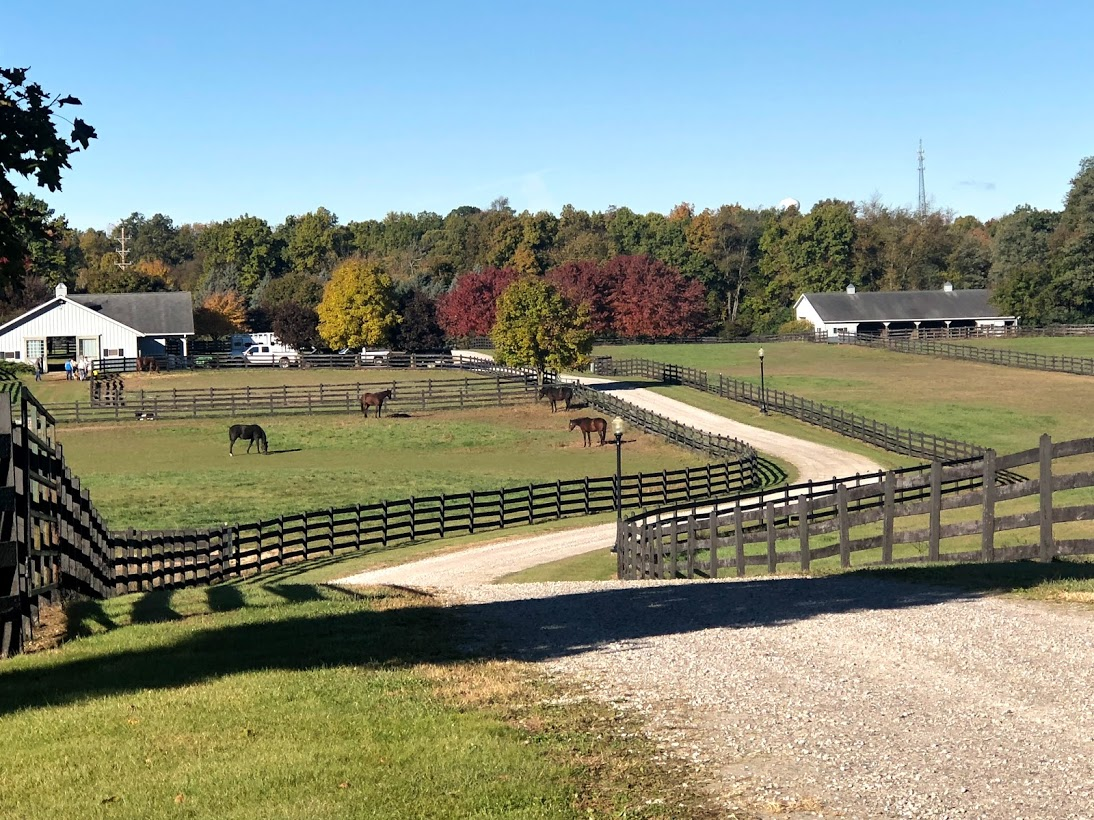A gravel road winding along a Brown horse fence with a view of pastures with horses and a forest of trees in Fall Colors.