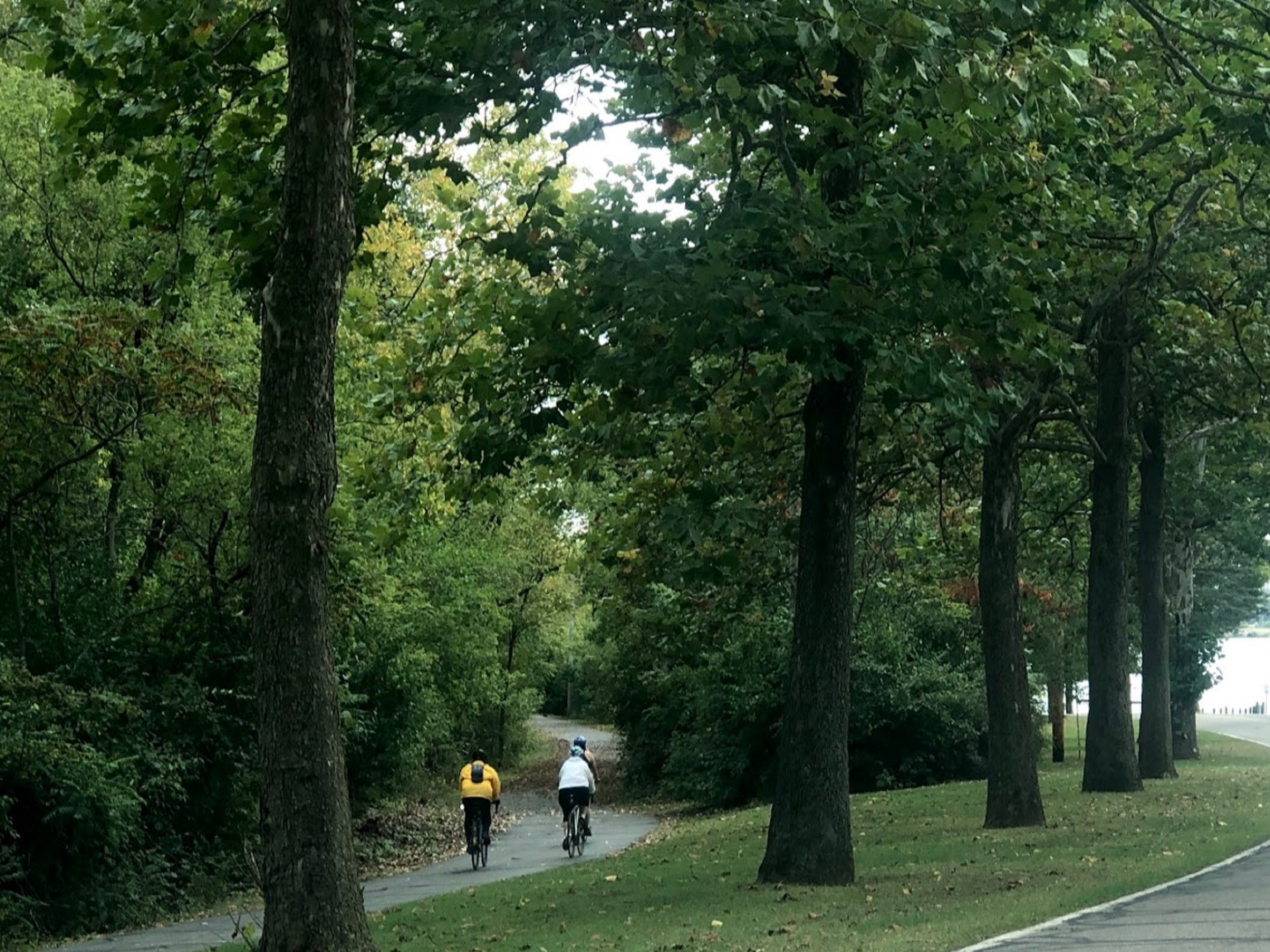 bike path with riders wearing white and yellow jerseys in a forest with green trees