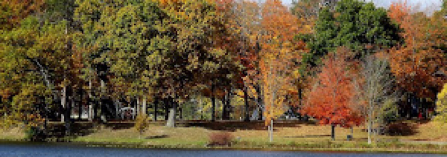 colorful fall colors forest scene