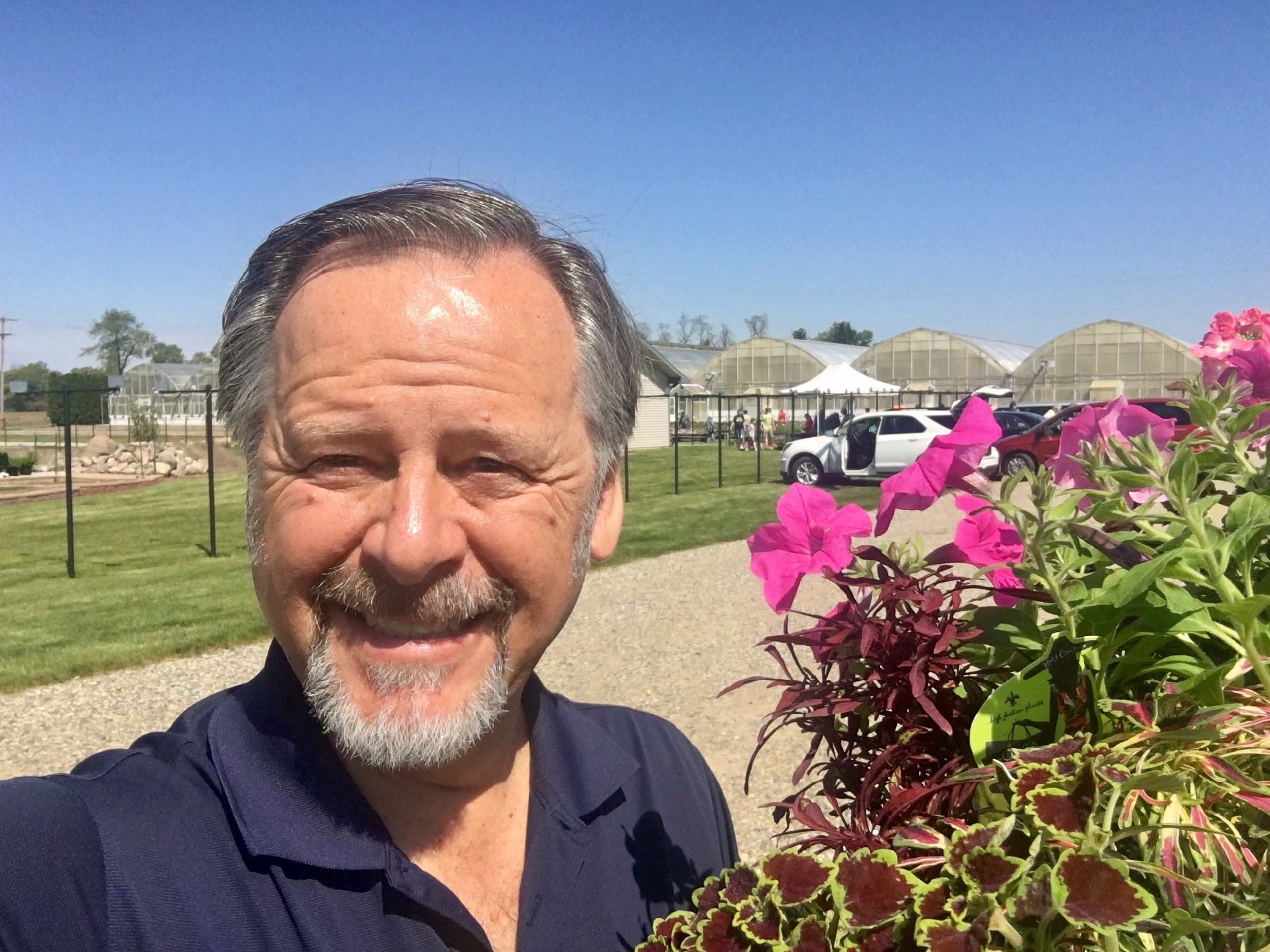 Man with pink petunia flowers at green house